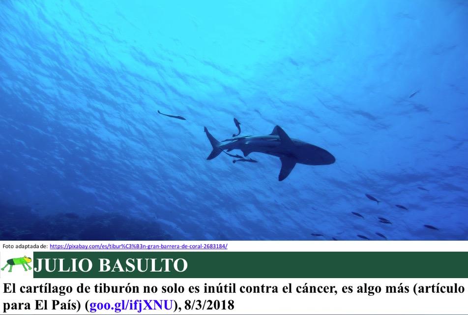 El cartílago de tiburón no solo es inútil contra el cáncer, es algo más (artículo para El País)